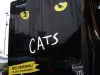 PIS-Cats-Graz11